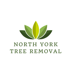 Tree Removal North York - North York, ON, Canada
